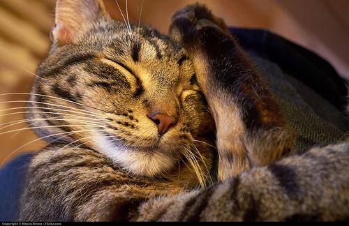 覚えておきたい、睡眠の質を上げる7つの方法