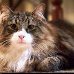 猫の体が熱い気がするとき、体温などチェックしたいこと