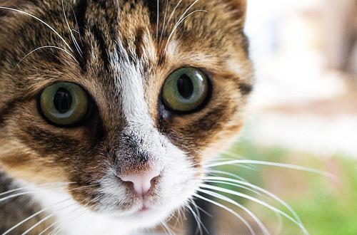 猫のアップ写真