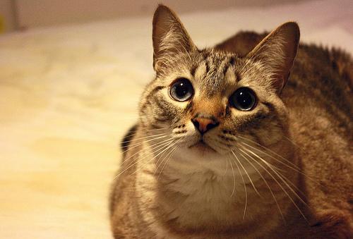 【猫が人になつく理由】猫は人と違う価値観、性格を持っている【猫の習性】