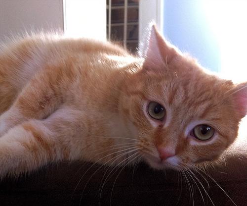 猫を飼うときの費用 避妊・去勢の必要性と意味
