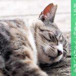 猫がベッドを使ってくれない理由 快適な猫ベッドを確保しよう