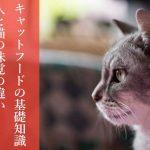 【甘党の猫はいない】人と猫の味覚の違いとキャットフードの基礎知識