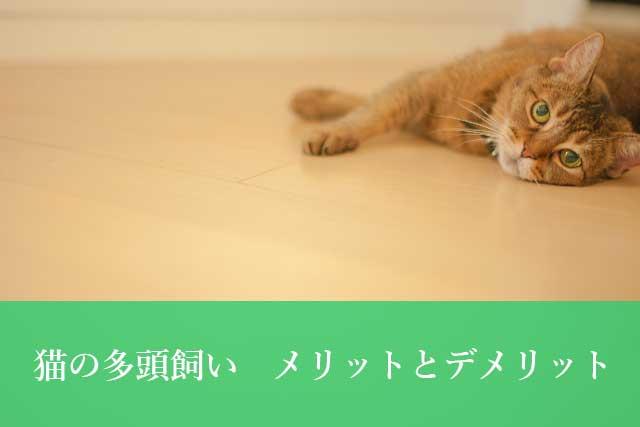 猫の多頭飼いってどうなの? メリット・デメリットと注意点