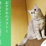 猫にブラッシングする効果とおすすめのブラシ、毛の掃除方法