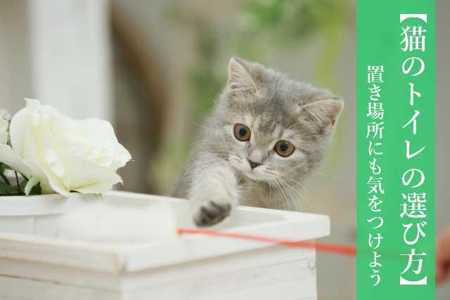 【おすすめトイレあり】猫のトイレとトイレ砂の選び方 置き場所にも気をつけよう