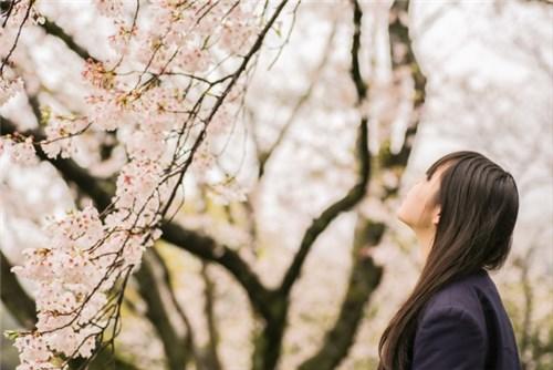 卒業シーズン、桜の花を見上げる若い女性
