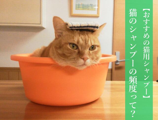 【おすすめシャンプーあり】猫のシャンプーの頻度って? 長毛種には必要なシャンプー、入浴