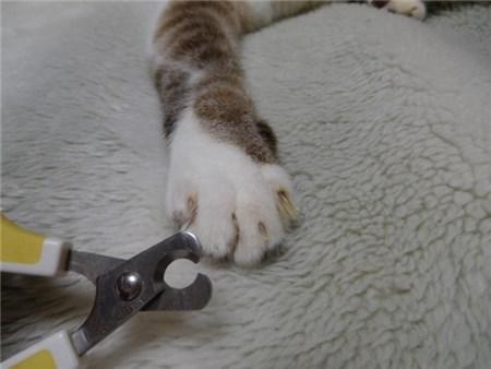 猫の足と爪切り