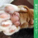 【おすすめ爪切りアリ】猫の爪切り、おすすめの方法【便利グッズの紹介も】