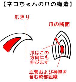 猫の爪の構造