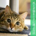 【おすすめアリ】爪とぎ器を上手に選ぶ方法と猫が爪とぎをやめない理由