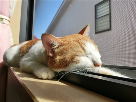 窓際で日向ぼっこをする猫