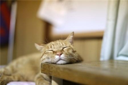 机に顎を載せて寝る猫