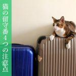 猫の留守番4つの注意点とおすすめ自動給餌器