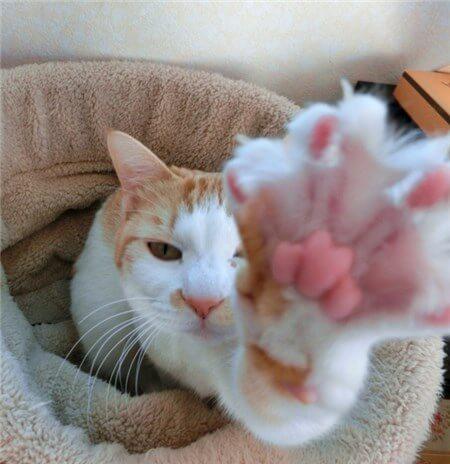 手をこちらに向ける猫