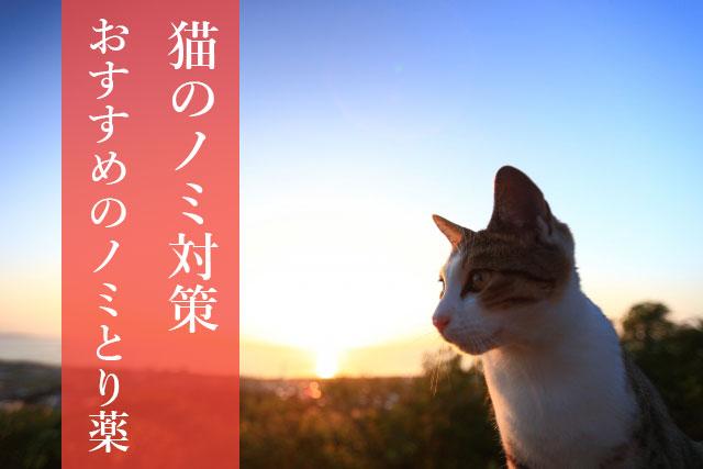 猫のノミ対策と病害 駆除におすすめのノミ取り薬