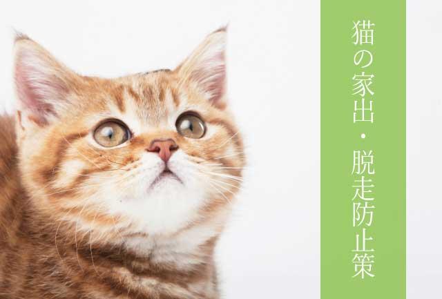 猫の家出・脱走防止策 網戸から出ないようにする方法