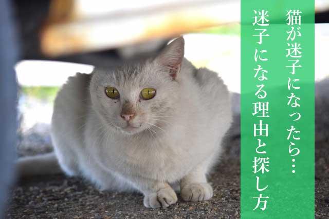 【迷子防止】猫が迷子になったらやるべきこと、迷子になる理由と探し方